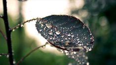 Gentle Rainforest Rain sounds for Relax Relaxing Rain Sounds, Sound Of Rain, Mood, Music, Youtube, Muziek, Musik, Youtube Movies, Songs