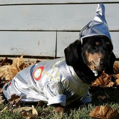 Romy the dachshund as the Tin Man from The Wizard of Oz