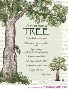 quote it takes several whacks to fell a tree - Google Search