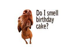 Smells like Birthday Cake