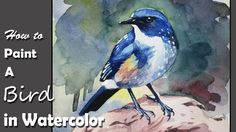 How to Paint A Bird in Watercolor