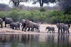 Elephants In Angola