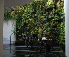 Patrick Blanc's home, inside. Source: www.murvegetalpatrickblanc.com