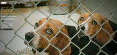 Hamilton Law and Mediation, PLLC: One Nation Under Dog