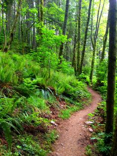 Oyster Dome Trail in North Puget Sound (Chuckanut Mountains)