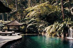 The rainforest-flanked, kidney-shaped pool at Como Shambhala Estate, Bali, near Ubud.