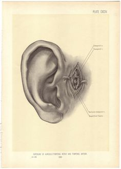 Resultado de imagen de oreja anatomia antigua