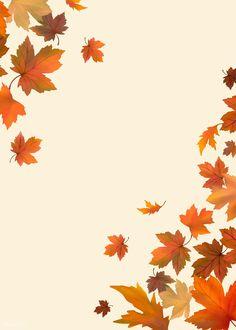 Cute Fall Wallpaper, Iphone Wallpaper Fall, Framed Wallpaper, Holiday Wallpaper, Halloween Wallpaper Iphone, Flower Background Wallpaper, Flower Backgrounds, Wallpaper Backgrounds, Fall Leaves Wallpaper