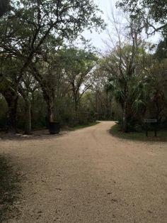 Nature Walk, Lettuce Lake Park - Tampa, Florida; January, 2015