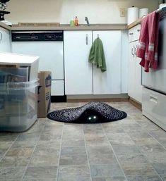 Imagenes De Gatos Un Poco Extrañas
