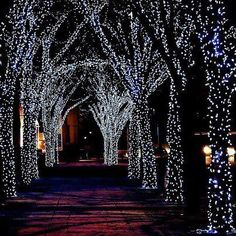 #Christmas lights  #winter #photography white lights on tree lined path ToniK Joyeux Noël  Beautiful!