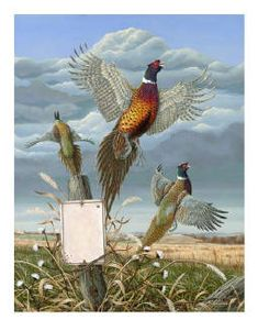Ring-necked pheasants...of New York State.