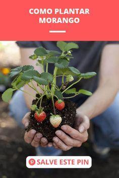 Garden Veranda Ideas, Plantas Bonsai, Vertical Farming, Pitaya, Diy Planters, Succulents Garden, Trees To Plant, Vegetable Garden, Garden Design