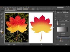 How to Convert a JPEG Image Into a Vector Graphic in Adobe Illustrator - YouTube