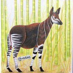 My okapi #milliemarotta #curiouscreatures #milliemarottascuriouscreatures #coloringforadults #milliemarottabooks #okapi #prismacolorpencils