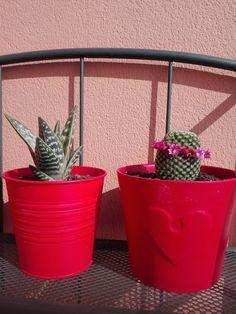 My little king & queen succulents
