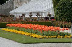 A colourful row of tulips at Powerscourt Gardens, Ireland www.powerscourt.ie