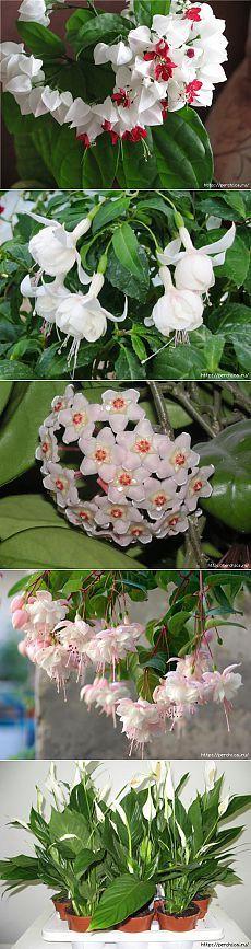 11 способов удобрить домашние растения