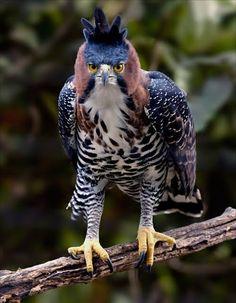 Fotografías de Aves exóticas del Mundo - Taringa!