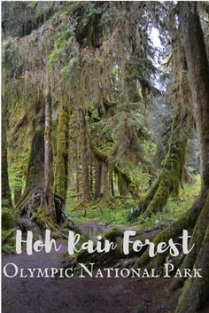 Hoh Rain Forest in O