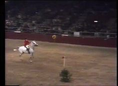 Horse breaking a world record by jumping over 7 and a half feet