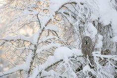 """Una de las mejores fotos del concurso """"Nature Photographer of the Year 2012"""""""