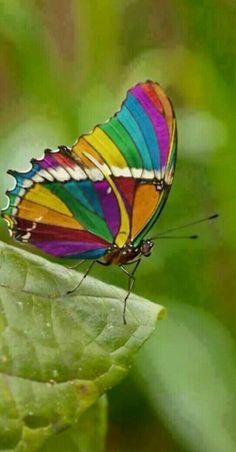 Colors are life - i colori sono la vita - #colori #colors #couleurs #farben…