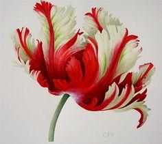 james aponovich | Hind art: الازهار في لوحات رسم