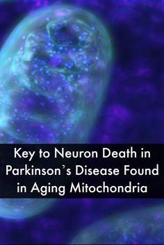 Key to Neuron Death in Parkinson's Disease Found in Aging Mitochondria #ParkinsonsNewsToday