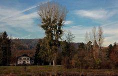 Reitstall, Schloss und viele Misteln,  ... sieht man aus dieser Perspektive im Mettlacher Park rund um Schloss Saareck. Vorausgesetzt man steht auf der anderen Saarseite. :-)