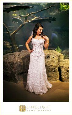 Fancy  wedding photography weddingphotography FloridaAquarium Tampa Florida stepintothelimelight limelightphotography