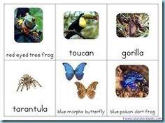 Rainforest Printables and More - 1+1+1=1