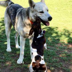 Forever friends at Laguna Beach Dog Park - Laguna Beach, CA - Angus Off-Leash #dogs #puppies #cutedogs #dogparks #lagunabeach #california #angusoffleash