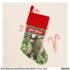 Cute Nigerian Dwarf Dairy Goat Kid Christmas Stocking Christmas Card Holders, Christmas Cards, Kids Christmas Stockings, Nigerian Dwarf, Santa Claus Is Coming To Town, Christmas Animals, Goats, Dairy, Cute