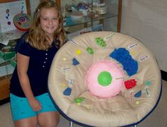 3d cell model project chair project class 7th science project for
