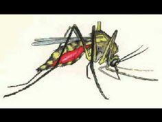 How To Make Your Own Natural Mosquito Repellent Russian Folk Songs, Natural Mosquito Repellant, Free Food, Make It Yourself, Nature, Mosquitoes, Bugs, Diet, Album