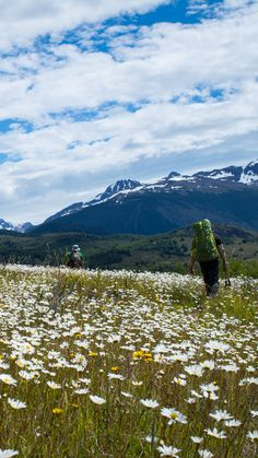 Hiking through Patagonia's flowers fields - Paine Circuit, Torres del Paine NP, #Patagonia