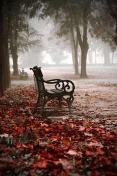 seasonalwonderment:  Autumn Mist