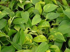 Plantas para clima subtropical.