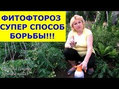 ФИТОФТОРОЗ - Эпидемия началась! Обрабатываем вместе со мной помидоры, огурцы от фитофторы! - YouTube