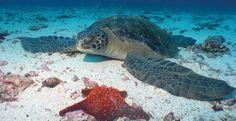 Ecuador & Galapagos Scuba Diving