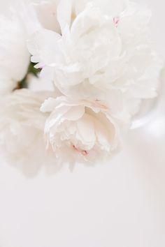 White Peonies in the Spring - Hej Doll Flower Background Wallpaper, White Wallpaper, Flower Backgrounds, Wallpaper Backgrounds, Iphone Wallpaper, Wallpapers, Wallpaper Quotes, Peonies And Hydrangeas, White Peonies