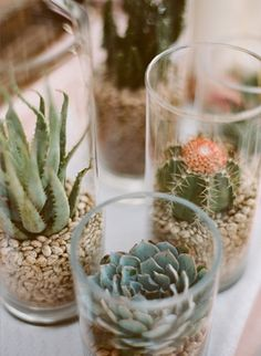 succulents and cactus in glass Succulent Centerpieces, Glass Centerpieces, Succulent Terrarium, Terrariums, Glass Cylinder Vases, Clear Vases, Glass Jars, Succulents In Glass, Planting Succulents