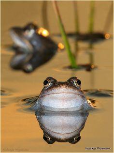Ik hou je in de gaten !   lijkt deze kikker te zeggen gebruik daarom onze gifvrije ruitensproeier antivries .