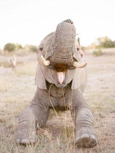 Happy Elephant, Elephant Love, Elephant Pics, Elephant Images, Cute Baby Animals, Animals And Pets, Funny Animals, Nature Animals, Wild Animals