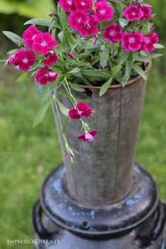 Think outside the pot! Dianthus in maple sap bucket planter. Get creative container ideas for your garden!