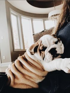 The major breeds of bulldogs are English bulldog, American bulldog, and French bulldog. The bulldog has a broad shoulder which matches with the head. Cute Puppies, Cute Dogs, Dogs And Puppies, Doggies, Puppies Tips, Mastiff Puppies, Fluffy Puppies, Awesome Dogs, Cute Baby Animals
