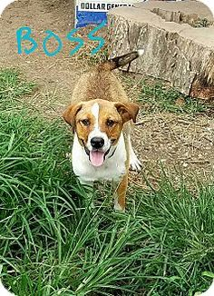 ADOPTED!!!! Border Collie/Terrier (Unknown Type, Medium) Mix Dog for adoption in Lawrenceburg, Tennessee - Boss