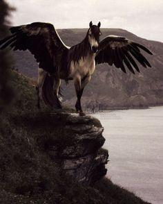 Fantastic Beasts: The Winged Horse is found worldwide, and there are many different breeds, including Abraxan, Aethonan, Granian and Thestral. Owners of winged horses are required by law to cast Disillusionment Charms on them regularly. Owners may...