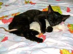 Kedi-Fare